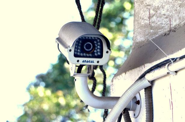Telecamere e nidi. Sicurezza e sospetto.