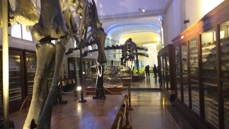 Bologna, un dinosauro in via Zamboni
